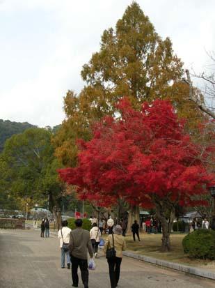 0511吉香公園01.jpg